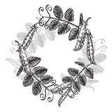 Set of hand drawn peas illustrations isolated on white background. Vector Floral wreath. Graphic round border. Set of hand drawn peas illustrations isolated on Stock Photo
