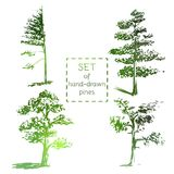 Set of hand-drawn pines. Sketch design. Vector illustration Stock Photo