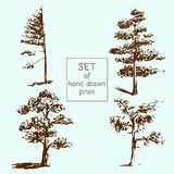 Set of hand-drawn pines. Sketch design. Vector illustration Royalty Free Stock Photo