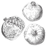 Set of hand drawn pomegranates Stock Image