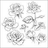 Set of hand-drawn roses. Vector Royalty Free Stock Photo