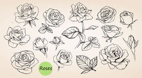 Set of hand drawn roses. Vector Stock Photos