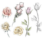 Set of hand drawn roses. Vector flowers illustration. Royalty Free Stock Images