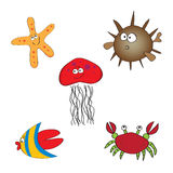 Set of hand drawn sea animals. Collection of hand drawn sea animals - angel fish, starfish, crab, diodon and jelly fish Royalty Free Stock Image
