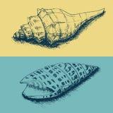 Set of hand-drawn sea shells Stock Photo