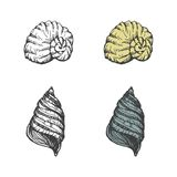 Set of hand-drawn seashells. vector eps8 Stock Photos