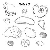 Set of hand drawn shells Stock Photos