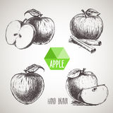 Set of hand drawn sketch apples. Stock Photography