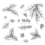 Set of hand drawn sketch Christmas holly branches. Vintage style. Traditional christmas decoration. For design holiday card, vector illustration