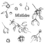 Set of hand drawn sketch Christmas mistletoe branches. Vintage style. Traditional christmas decoration. For design holiday card, vector illustration