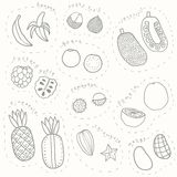 Set of hand drawn sketch tropical fruits part 1. Set of hand drawn sketch tropical fruits. Vector EPS10 illustration Royalty Free Stock Photo