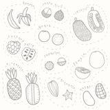 Set of hand drawn sketch tropical fruits part 1. Set of hand drawn sketch tropical fruits. Vector EPS10 illustration royalty free illustration