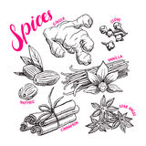 Set with hand-drawn spices Stock Photos