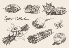 Set hand drawn spices and herb collection Vector Royalty Free Stock Photos