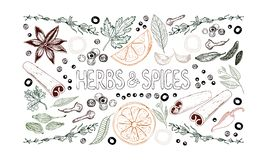 Set of hand drawn spices, herbs, vegetables, fruits and lettering on white background. Horizontal color vector illustration royalty free illustration