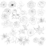 Set of  in hand drawn style roses Stock Photography