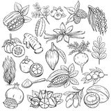 Superfood icons. Set hand drawn superfood icons. Vector sketch healthy detox natural product of camu camu, garcinia cambogia and maca. Carob, ginger, moringa royalty free illustration