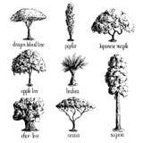 Set of hand drawn tree sketches. Set of hand drawn tree sketches -apple tree, olive, Japanese maple, acacia, brahea, poplar, sequoia, dragon blood. Black Stock Photography