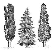 Set of hand drawn trees italian cypress and stone pine , pinea, vector illustration, engraved symbols of south. Evergreen stock illustration