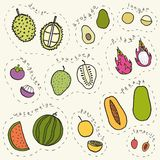Set of hand drawn tropical fruits part 2. Set of hand drawn tropical fruits. Vector EPS10 illustration royalty free illustration