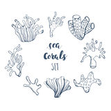 Set of hand drawn underwater coral reef elements. Vector design for your sea life illustration. Blue, pink, green, orange corals o Stock Photography