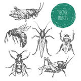 Set of hand drawn vector insects. Royalty Free Stock Image