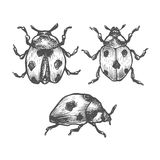 Set of hand drawn vector insects. Stock Image