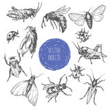 Set of hand drawn vector insects. Royalty Free Stock Photography