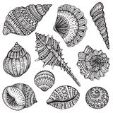 Set of hand drawn vector ornate seashells. Stock Image