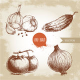 Set of hand drawn vegetables. Tomatoes, onion, cucumber and garlics. Stock Photos