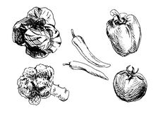 Set of hand drawn vegetables. Vector illustration Royalty Free Stock Images