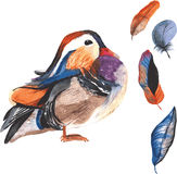 A set of hand-drawn watercolor containing bird Aix galericulata Stock Photography