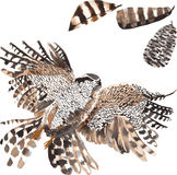 A set of hand-drawn watercolor containing bird Hawk Royalty Free Stock Photography