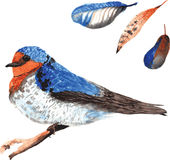 A set of hand-drawn watercolor containing bird Hirundo neoxena a Stock Photos