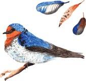 A set of hand-drawn watercolor containing bird Hirundo neoxena a Stock Photos