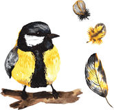 A set of hand-drawn watercolor containing bird Parus and feather Royalty Free Stock Image