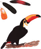 A set of hand-drawn watercolor containing bird Ramphastos toco a Stock Photography