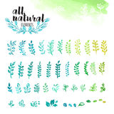 Set of hand drawn watercolor natural elements, leaves and tree branches Royalty Free Stock Images