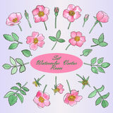 Set with Hand Drawn Watercolor Roses and leaves Royalty Free Stock Images