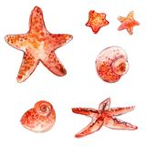 Set of hand drawn watercolor starfishes and sea shells. Artistic vector illustrations isolated on white background. Royalty Free Stock Photos