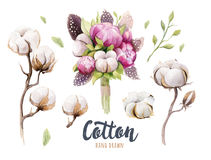 Set of hand drawn watercolour Cotton boll, peonies and feathers. Isolated watercolor peony painting pon white background. Cotton branch flower and feather royalty free illustration