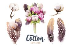 Set of hand drawn watercolour Cotton boll, peonies and feathers. Isolated watercolor peony  painting  pon white background. Cotton  branch flower and feather Stock Images