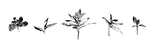 Set of hand drawn weed field herbs. Small plant branches with leaves. Vector illustration. Black image on white background Royalty Free Stock Images
