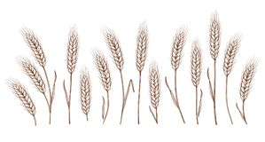 Set of hand drawn wheat ears. Set of isolated hand drawn wheat ears on white background Stock Photography