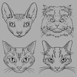 Set of Hand Drawn Wild Cat Portraits  Royalty Free Stock Photo