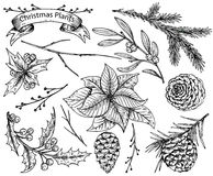 Set of  hand drawn winter plants Stock Photography
