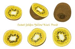 Set of hand-drawn yellow kiwi fruit, single, peeled and sliced fruits. realistic drawing, isolated on white background Stock Photo
