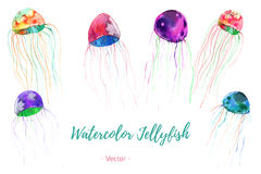 Set of hand painted watercolor bugs, vector. Stock Image