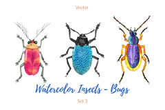 Set of hand painted watercolor bugs, vector. Royalty Free Stock Photography