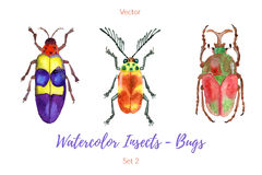 Set of hand painted watercolor bugs, vector. Royalty Free Stock Photo